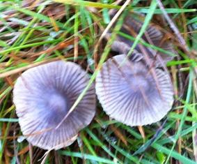 mushroom 3 oct 2014