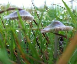 mushroom1 oct 2014