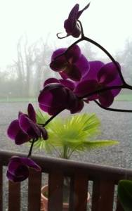 orchid shot from window