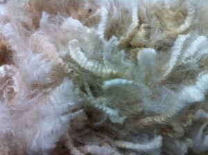 white and fawn fleeces