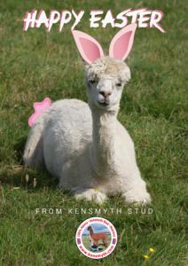 happy alpaca easter