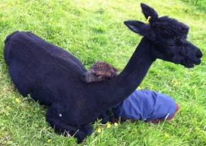 new cria fathers day