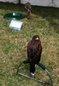 COTS SHOW JULY 2015 FALCON DISPLAY 12