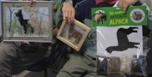 alpaca activity pack anyone can WEB