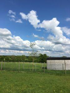 blue skies trees
