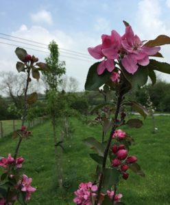 fruit tree 1 WEB