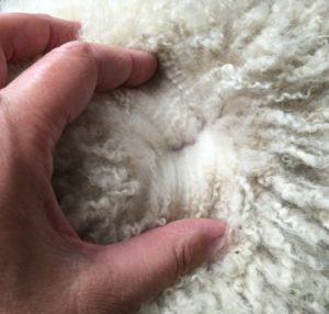 cria fleece 1