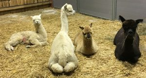 cria-warning-1