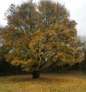 trees-losing-leaves-1